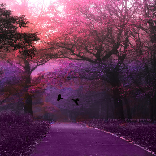 Wallpaper Images Of Fall Trees Lined Lake Nature Photography Surreal Haunting Trees Forest