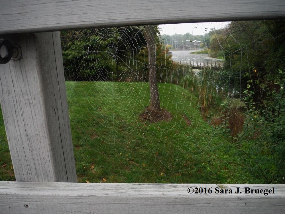 Spider web strung between bridge railings .  Photo copyright Sara J. Bruegel, September 2014