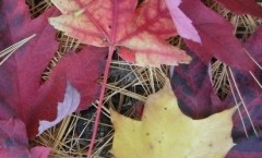 cropped-cs4k-cover-photo-leaves2.jpg