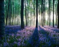 35 Breathtaking Forest Wallpaper Designs - Creative ...