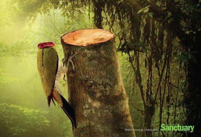 campagne-sensibilisation-deforestation