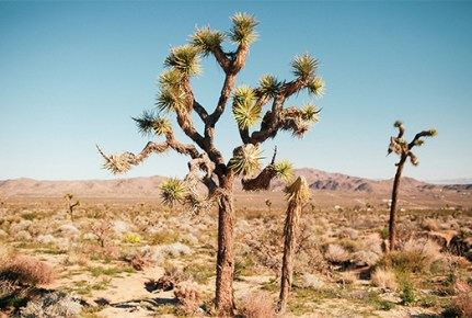 joshua tree, desert, california, creativestay