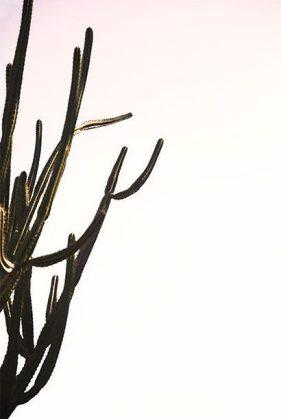 max wanger print shop cactus home refresh new year