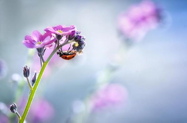 ladybug05
