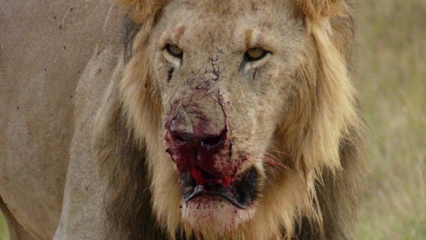 Animal Planet Wallpaper 10 Animals That Turned Into Serial Killers Crimeviral Com