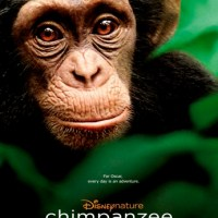 "Disneynature's ""Chimpanzee"" in theaters today! (video)"