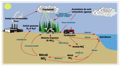 circuitul nitratilor in natura