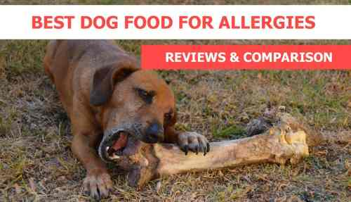 Medium Of Best Dogs For Allergies