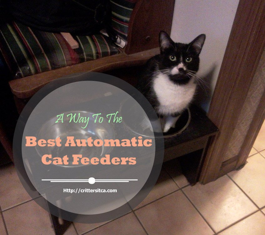 Top 10 Best Automatic Cat Feeders Reviews (Update 2019) Crittersitca