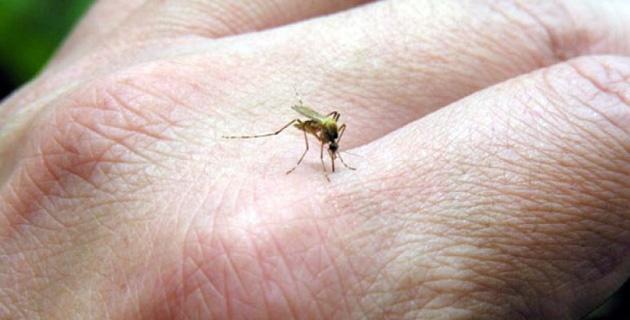Autoridades de Salud en alerta por virus mayaro