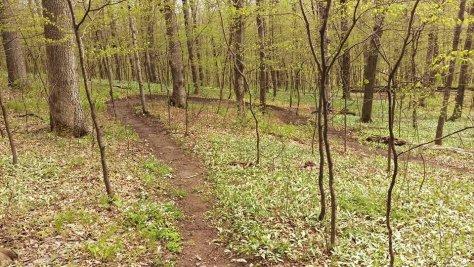CROCT trail segment at Caron Park
