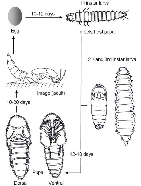diagram of bloated abdomen