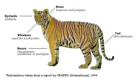 The Illegal Trade In Tiger Parts Crown Ridge Tiger Sanctuary