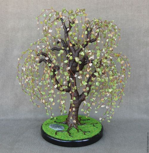 Medium Of Weeping Willow Bonsai
