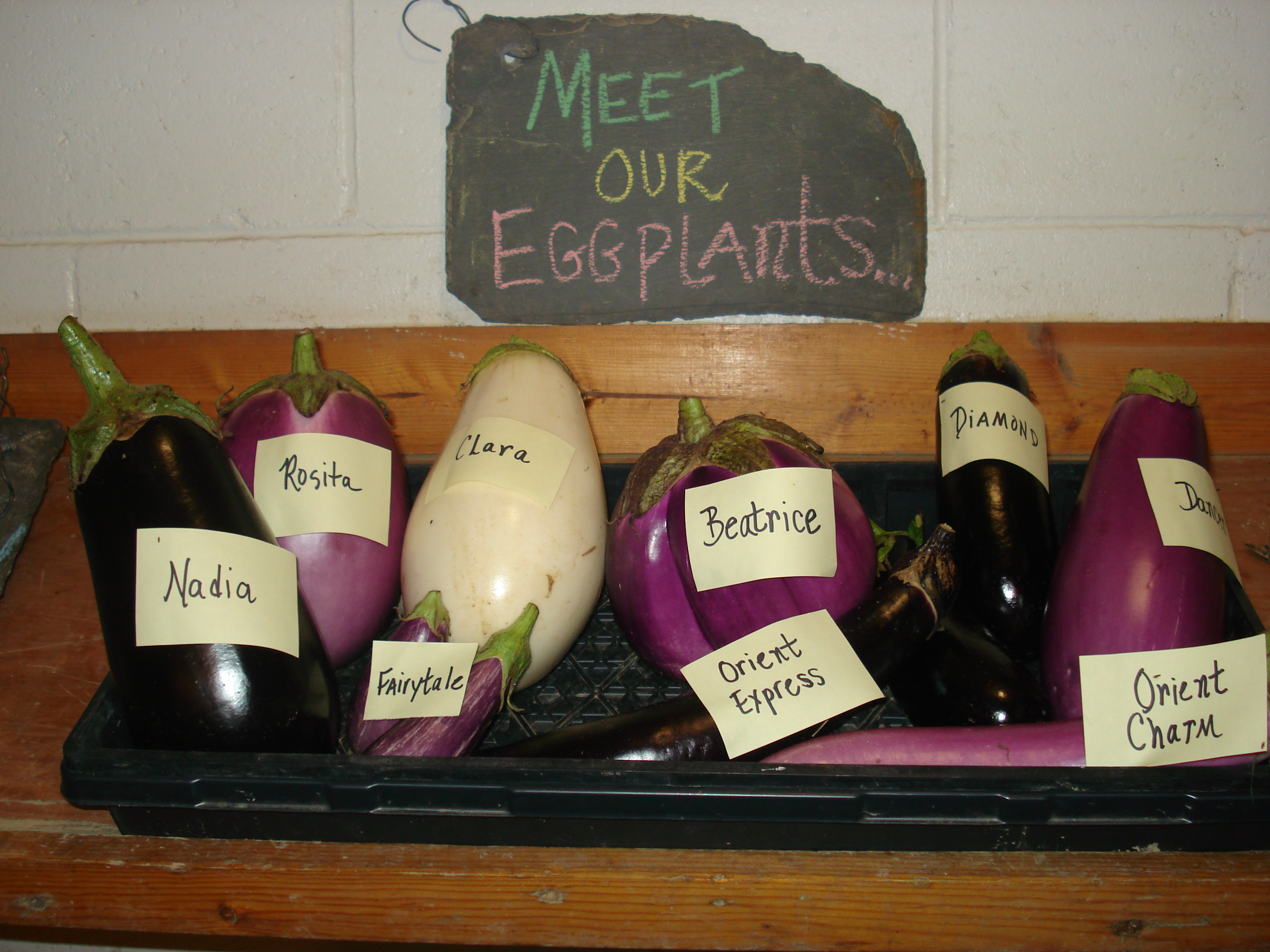 Farmhouse Cresskill Eggplant Csg At Genesis Farm