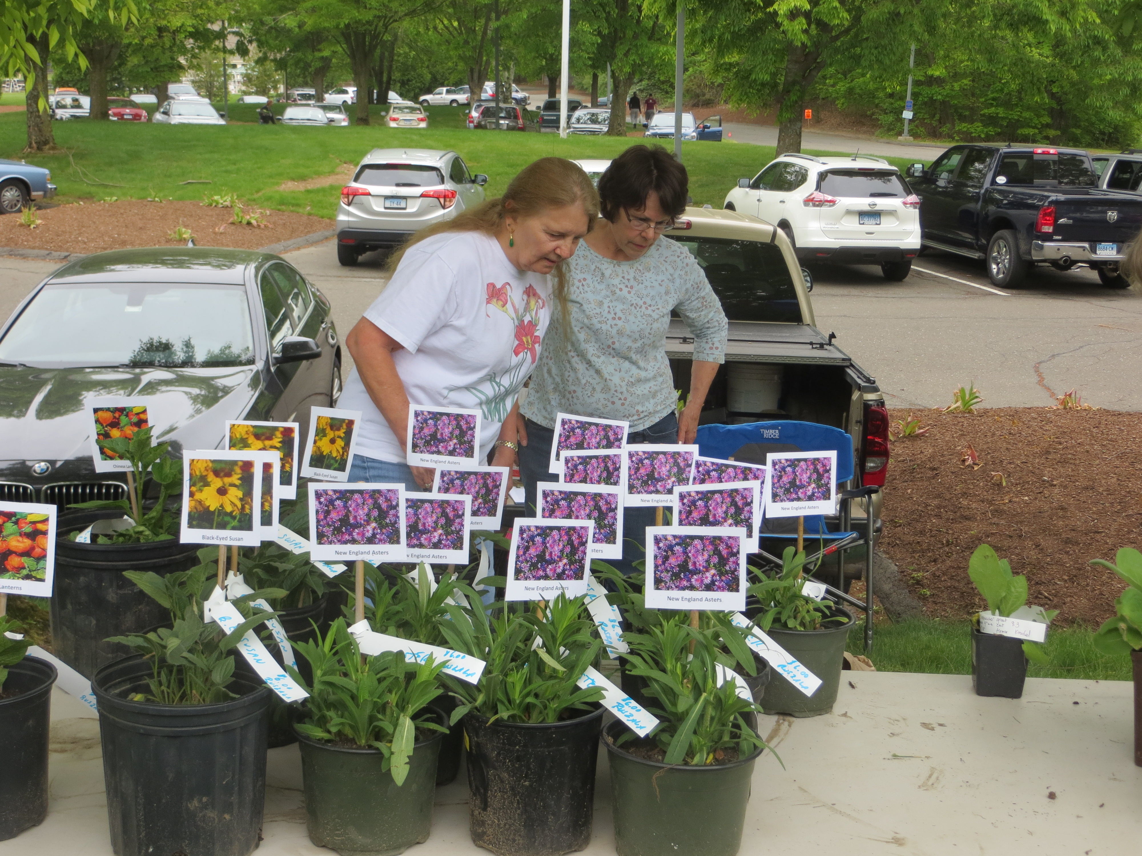 Asian Plants For Sale Plant Sale Connecticut Daylily Society