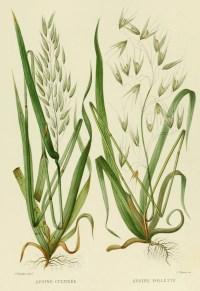 HERBIER on Pinterest   Botanical Illustration, Botanical ...