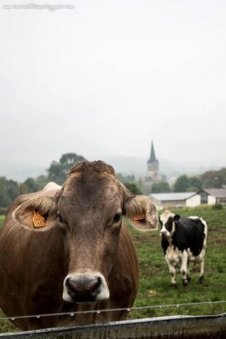 Ferme de Genevrière -Haute Marne – ©www.cuisinedetouslesjours.com