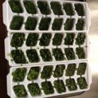 Freezing your own herbs