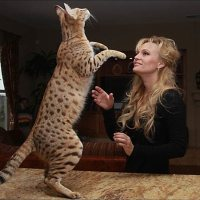 Savannah Cats - The COOLEST Feline Pet Around