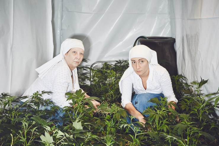 Sisters of the Valley Hermanas del Valle marihuana weed