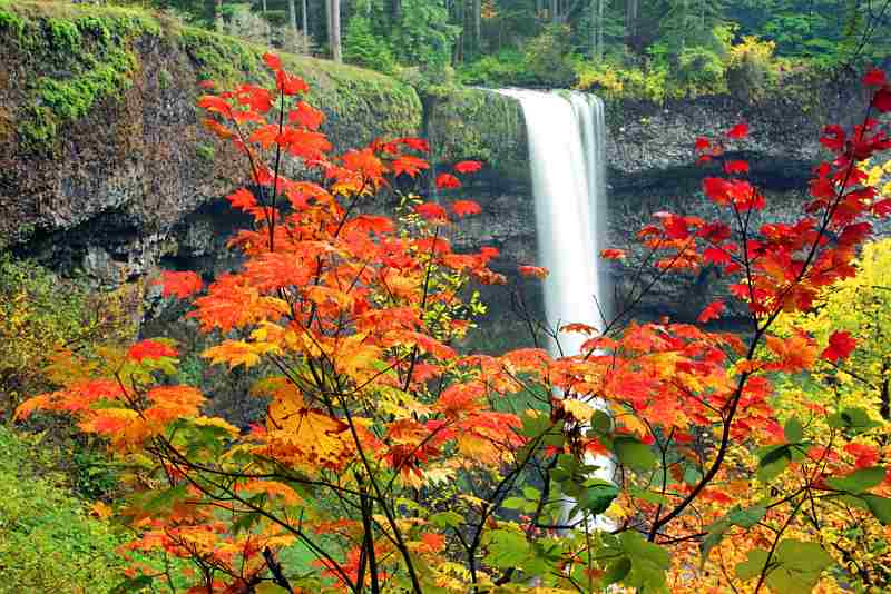 Snoqualmie Falls Wallpaper Culture Amp Living Waterfall Fall Leaves