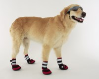 Nike Doggie Boots Dog Boots That Stay On | The River City News