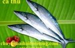 Giá bán cá thu ngừ tươi ngon bao nhiêu tiền 1kg ở TPHCM