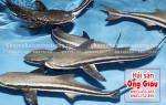 Giá bán cá Bớp biển – mua ở đâu tại TpHCM hiện nay – làm món gì ngon