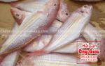 Giá cá Đổng tươi hiện nay bao nhiêu 1 kg – mua ở đâu tại TpHCM