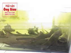 Cá Nhám giá bao nhiêu 1 kg – mua ở đâu tại TpHCM – Sài Gòn
