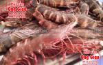 Tôm sú biển sống giá bao nhiêu tiền 1 kg ngày hôm nay tại TpHCM