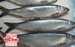 Mua cá Trích ở đâu bán tại TpHCM – giá bao nhiêu tiền 1 kg