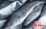 Cá tuyết là cá gì – Bán ở đâu – Giá bao nhiêu tiền 1 kg ở TpHCM