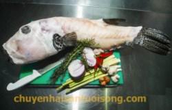 Cá Mỹ Nhân Ngư – Cá Mặt Thỏ bán bao nhiêu 1 kg?
