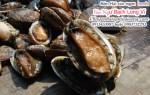 Bào Ngư tươi sống-khô giá mua bán bao nhiêu tiền 1kg tại TpHCM