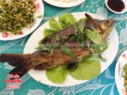Mua cá ét tươi ngon, giao hàng tận nơi, đảm bảo chất lượng