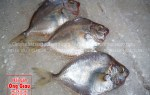 Loài cá liệt tươi ngon và nơi bán cá liệt