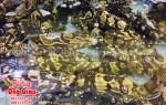 Giá bán cá mú trân châu tươi ngon