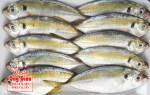 Giá bán và nơi bán cá ngân rẻ nhất thị trường