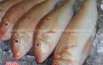 Giá bán và địa chỉ bán cá phèn tươi ngon hấp dẫn