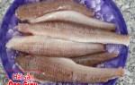 Giá cá mối tươi sống và các món ăn thơm ngon