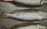 Khô cá nhồng Phú Quốc giá bao nhiêu 1 kg – bán ở đâu tại TpHCM