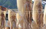 Giá mua bán mực khô Đà Nẵng ngon rẻ ở tại TpHCM bao nhiêu tiền 1 kg