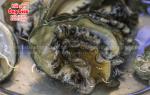 Bào ngư Hàn Quốc sống mua ở đâu bán – giá bao nhiêu tại tphcm
