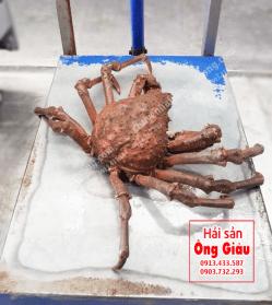 Cua nhện Alaska – Nhật Bản bán ở đâu – giá bao nhiêu tiền tại Việt Nam