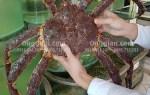 Cua King Crab giảm giá