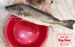 Cá Hồng Mỹ giá bao nhiêu tiền 1kg – cách chế biến nấu món gì ngon