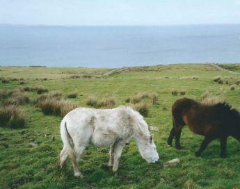 Doolin Connamera Donkeys