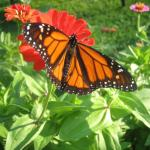 in Four Mounds flower garden